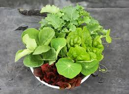 edible plants to grow in shade