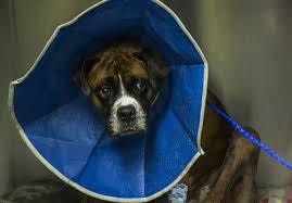 homemade dog cone alternative mylargedogs