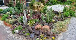 16 cactus rock garden designs ideas