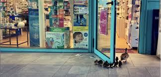 In tempi di infezione a Firenze anche le anatre vanno in farmacia