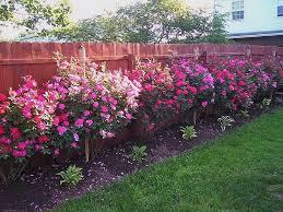 Pin By Katie Estes Eaton On Yard Rose Garden Design Landscaping Along Fence Rose Garden Landscape