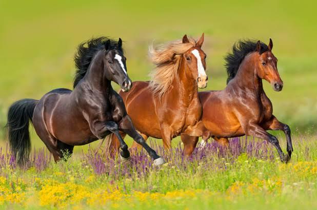 Age Versus Love Of Horses