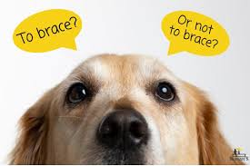 the dog acl brace 5 surprising answers