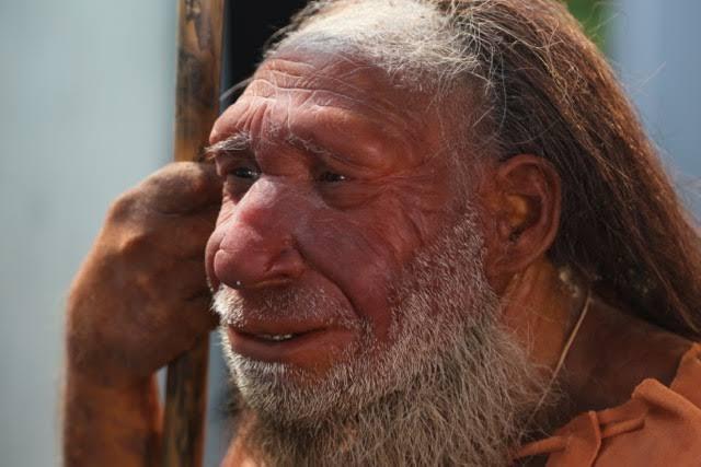 neandertal ile ilgili görsel sonucu