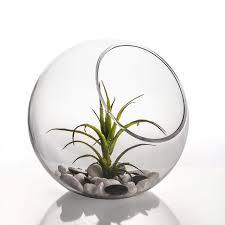 8 decorative glass terrarium slant cut