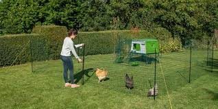 Portable Chicken Fence Omlet Chicken Fence Review 2020 Hutch And Cage