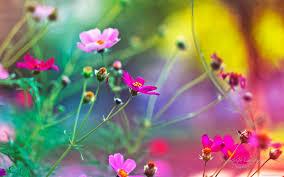 خلفيات ورود روعة خلفيات الورد الجميلة صبايا كيوت