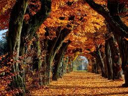 صور اشجار حلوه مناظر وبوستات طبيعية جدا صوري