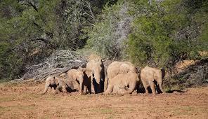 elephant-herd-mudbath-dam-samara-private-game-reserve-ida-hansen - Safari  News