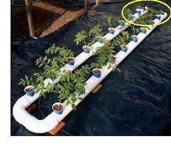 hydroponic gardening a helpful guide