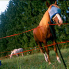 Horse Camping With Portable Panels And Electric Tape Expert How To For English Riders