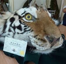 spur tiger trade in china