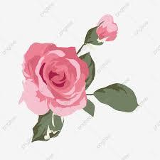 وردة وردية تتفتح وردية ورسم كرتون مفتوح وردة خالية من الرسوم