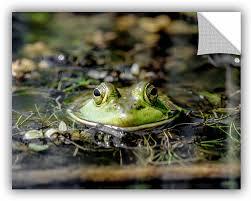 Artwall Mike Beach Frog Removable Wall Decal Wayfair