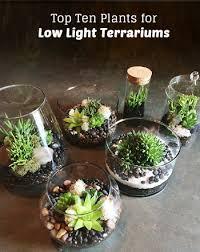 terrarium plants be equipped hanging