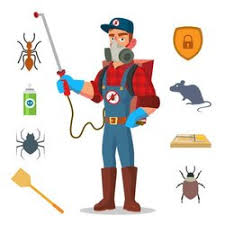 Yearly Residential Pest Control Services For Rodent, | ID: 21645031833