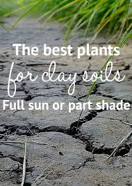 the best plants for clay soil grow in
