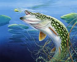 fishing wallpaper on hipwallpaper