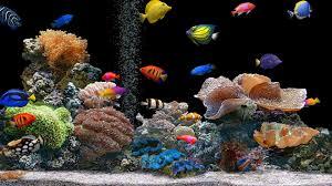 aquarium 4k uhd wallpapers top free