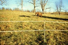 Fast Fence Horse Trail Ride Kit
