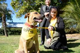 From left) Yellow Bridge CEO Penny Hamilton with team leader ... | Buy  Photos Online | Northern Star