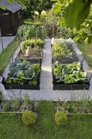 raised bed idea with clean spacing and