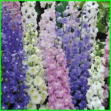 jenis bunga foto makna dan artinya lengkap com