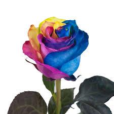 tinted rainbow roses 50 cm fresh cut