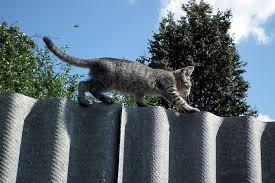 How Much Does A Cat Fence Cost Pet Lover Guy