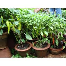 organic kitchen garden work in mumbai