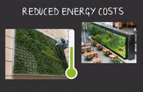 Ultimate Guide To Living Green Walls Ambius