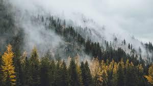 forest wallpaper wallpaperhd wiki
