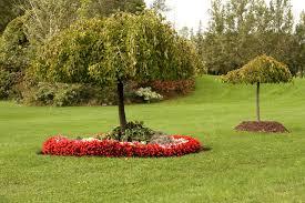 richmond hill small trees