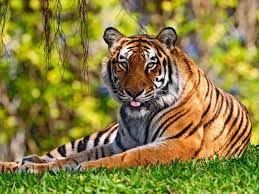 صور حيوانات خلفيات حيوانات جميله بنات كول