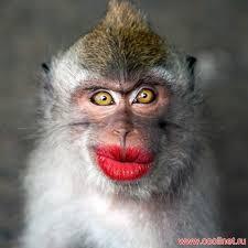 i ll be dobr funny monkey monkey