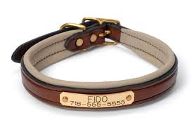 padded leather dog collar 17 and up