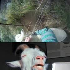 The Sheep Was Okay Btw Inb4 Butthurt By Touchmethere Meme Center