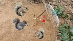 how to make squirrel trap work 100