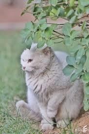 Chết lịm thần thái quý tộc của những con mèo trong Tử Cấm Thành ...