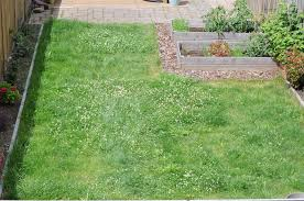 lawn to prevent weeds
