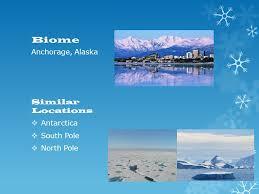 Artic Tundra By: Addie Cox, Maya Prince, Marin Debolt, Lucia Monroy. - ppt  download