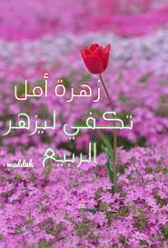 زهرة أمل واحدة تكفي ليزهر الربيع في القلوب مساؤكم أمل
