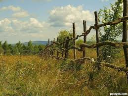 Farm Fence Picture By Mario For Fence Me Photography Contest Pxleyes Com