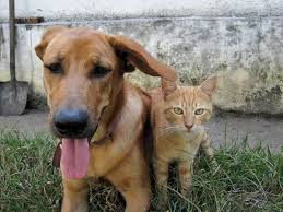 natural home remes for cats and dogs