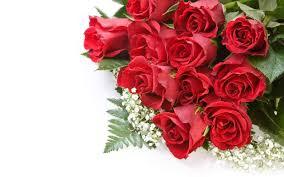 rose flowers wallpaper 2560x1600 38195
