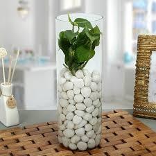 send clic money plant terrarium
