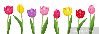 Vinilo Pixerstick Tulipanes de varios colores. Ilustración del ...