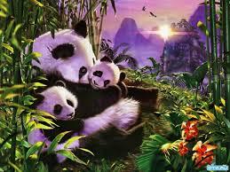 panda bear sunrise bears s