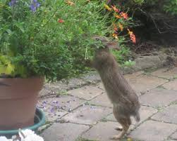 Humane Ways To Prevent Rabbit Damage In The Garden Hgtv