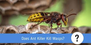 does ant kill wasps insect
